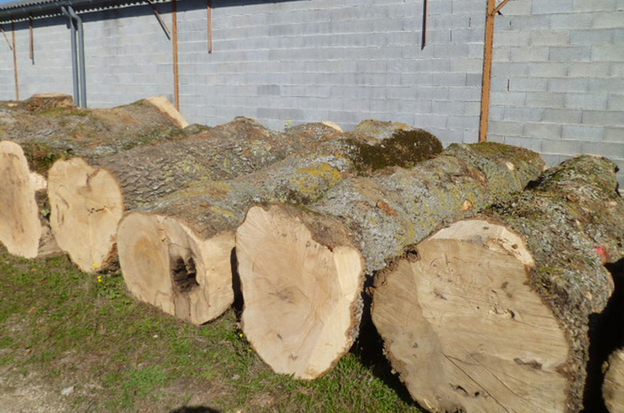 Larch Ash Log 1