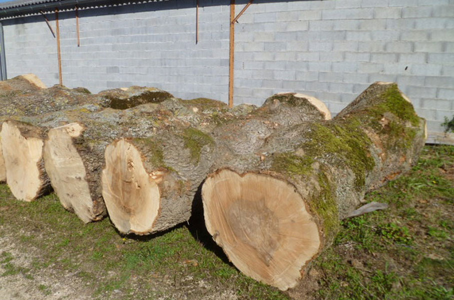 Larch Ash Log 2